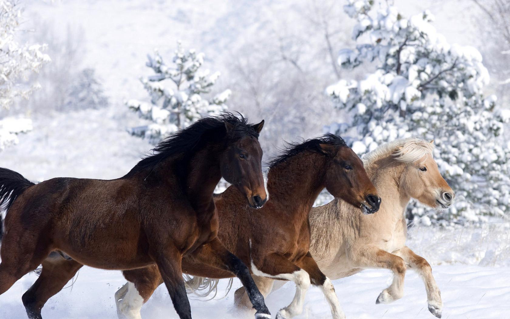 Тройка лошадей зимой картинки