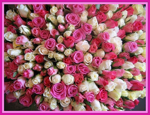 цветы фото 5 д