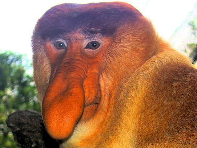самые смешные животные в мире