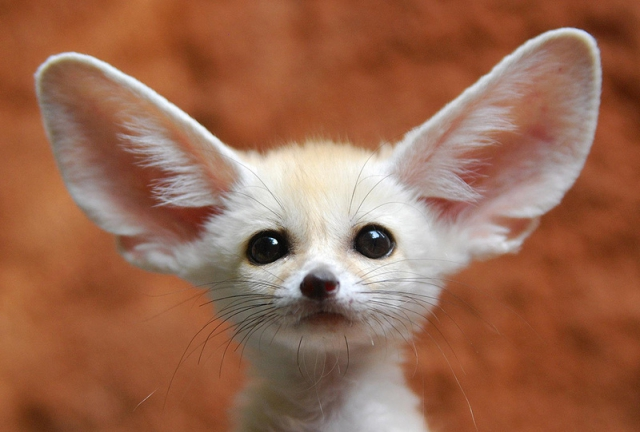 приколы про животных смотреть бесплатно: