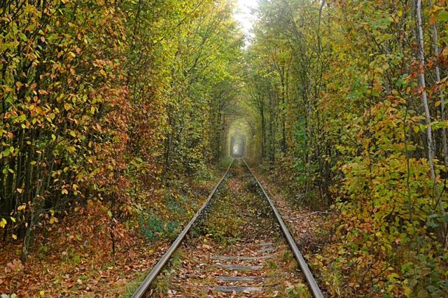 Железная дорога в лесу фото